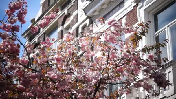 Jarní květinové růžové jarní slunce