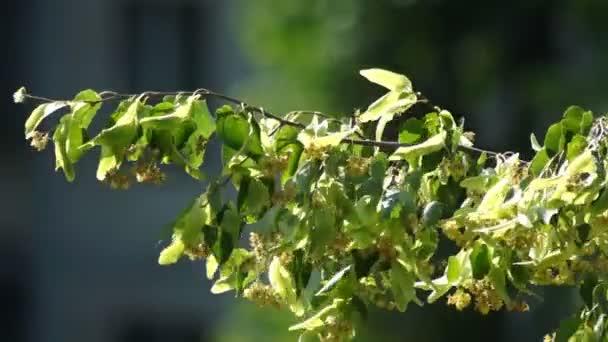 Zasadit stromy přírody jaro