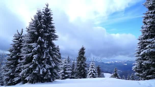 Zimní krajiny sněhu lesních stromů