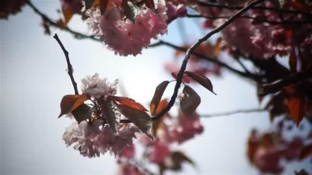 Jarní květina růžová slunce větev