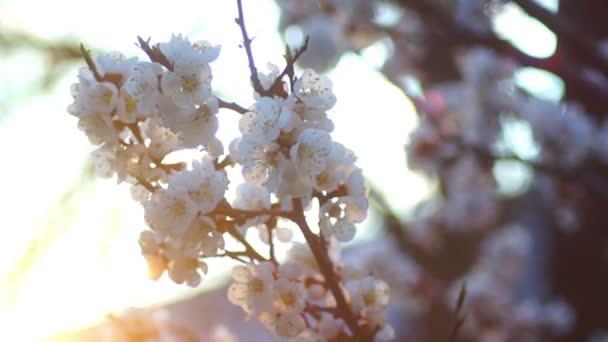 White flowers spring