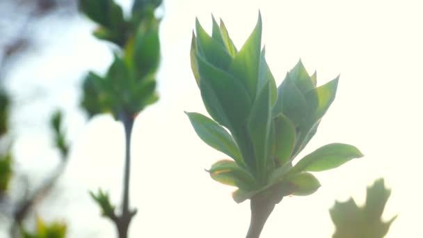 Green spring flower