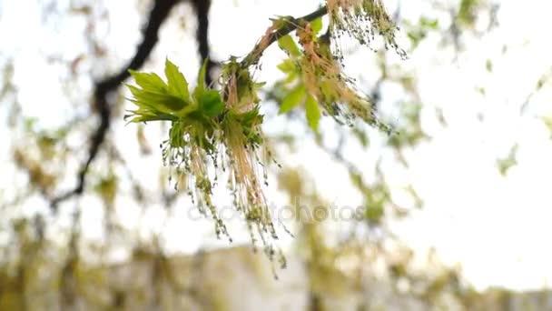 Květy rostlin na jaře