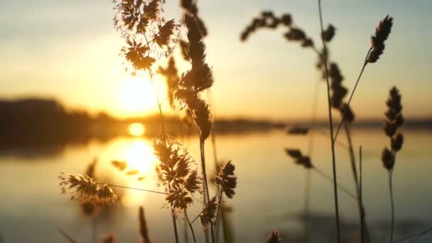 Příroda rostliny jezero sun