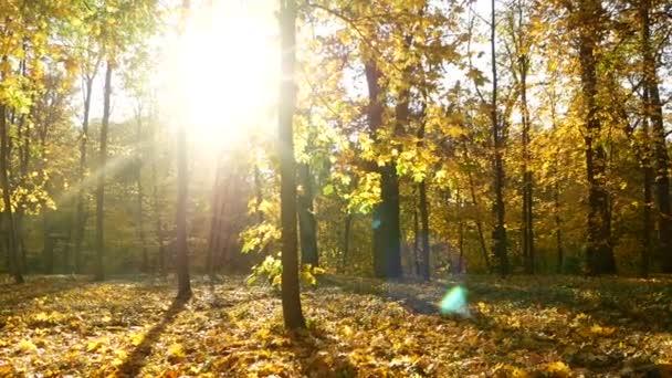 Podzimní slunce stromy lesa