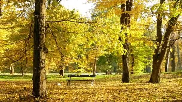Podzimní slunce forest Park