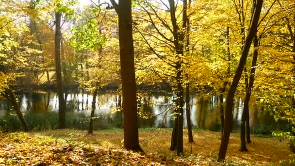 Sole di lago foresta dautunno