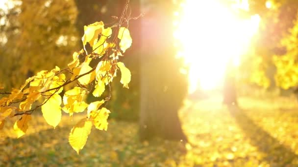 Barevné podzimní lesy