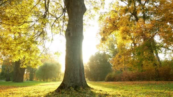 Podzimní listí stromů lesa