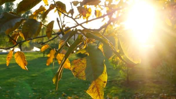 Park branch tree leaves