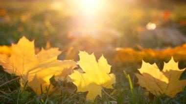 Leaves autumn grass