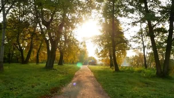 Podzim lesní přírody slunce