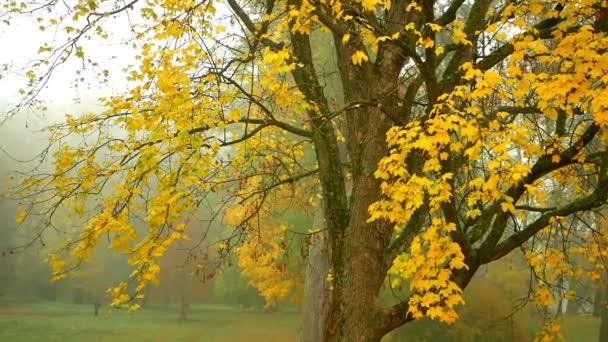 Köd levelek őszi ág