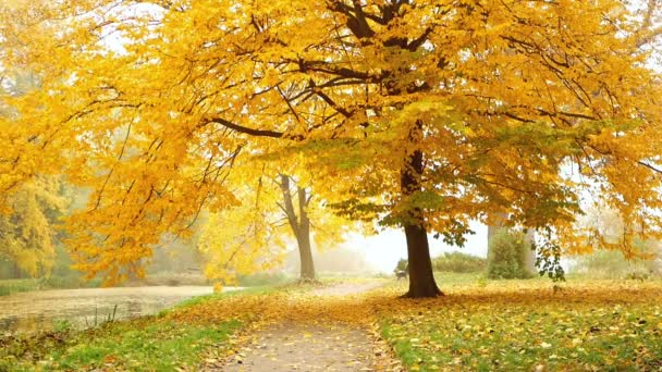 Podzimní park mlha listy