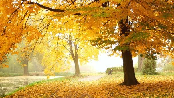 Parku listy na podzim podzim