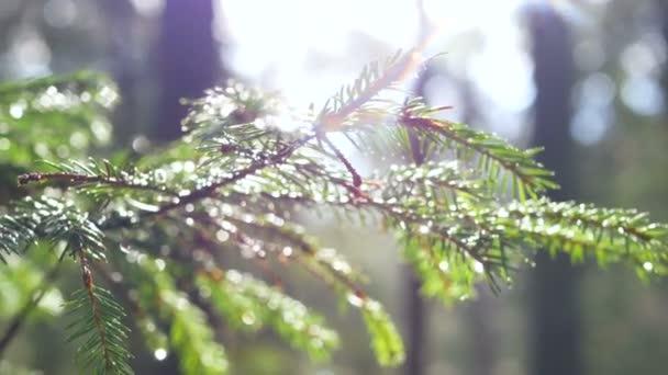 Lesní pramen větev slunce