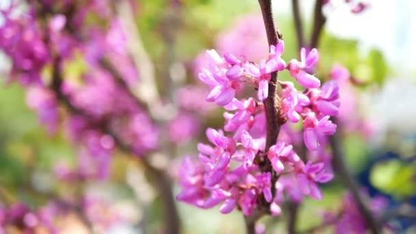 Sunny spring flowers