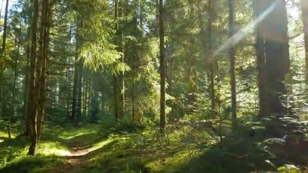 Kouzelné horské lesy kráčející slunce