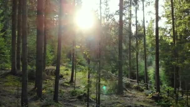 Forest tracking sun magical wood forest wild