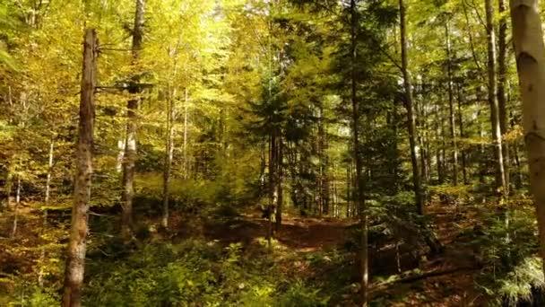 Ködös erdő ősz sugarak napfény fák