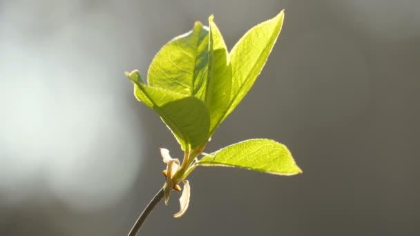 Zöld növény természet föld tavasz nyár nap vad jövő
