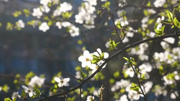 Jarní květiny strom květy otevřené letní slunce příroda