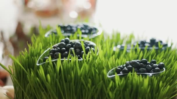 Close up shot of blueberry on the grass from the wedding candy bar.