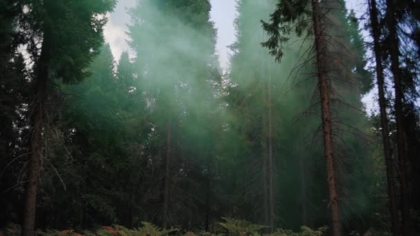 Mlhavý mystický les. Magická pohádková krajina. Střední výstřel