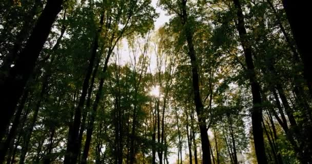 Letní les a paprsky světla mezi listy stromů. Široký záběr