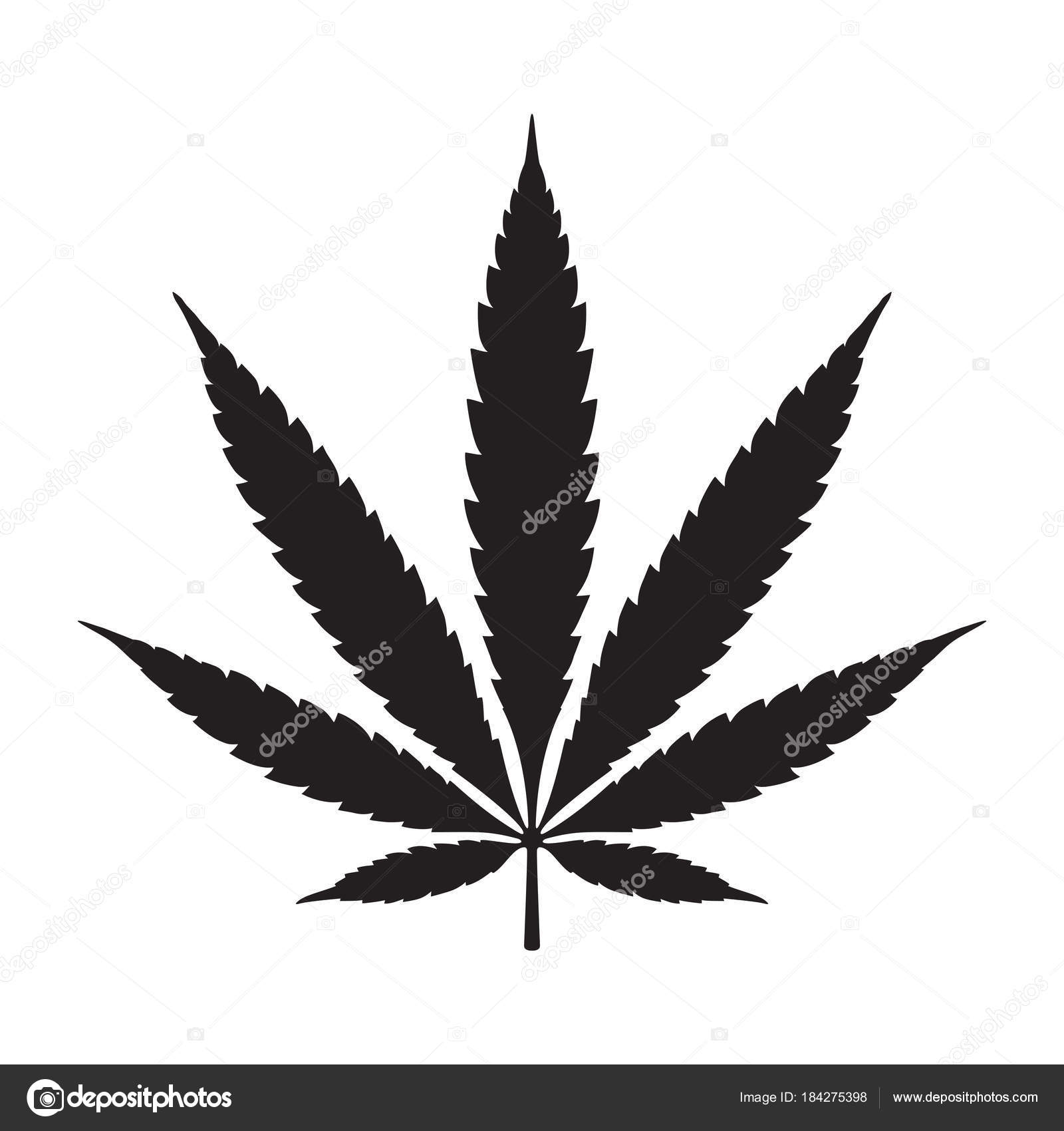 weed marijuana cannabis leaf vector illustration icon logo stock vector c cnuisin 184275398 depositphotos