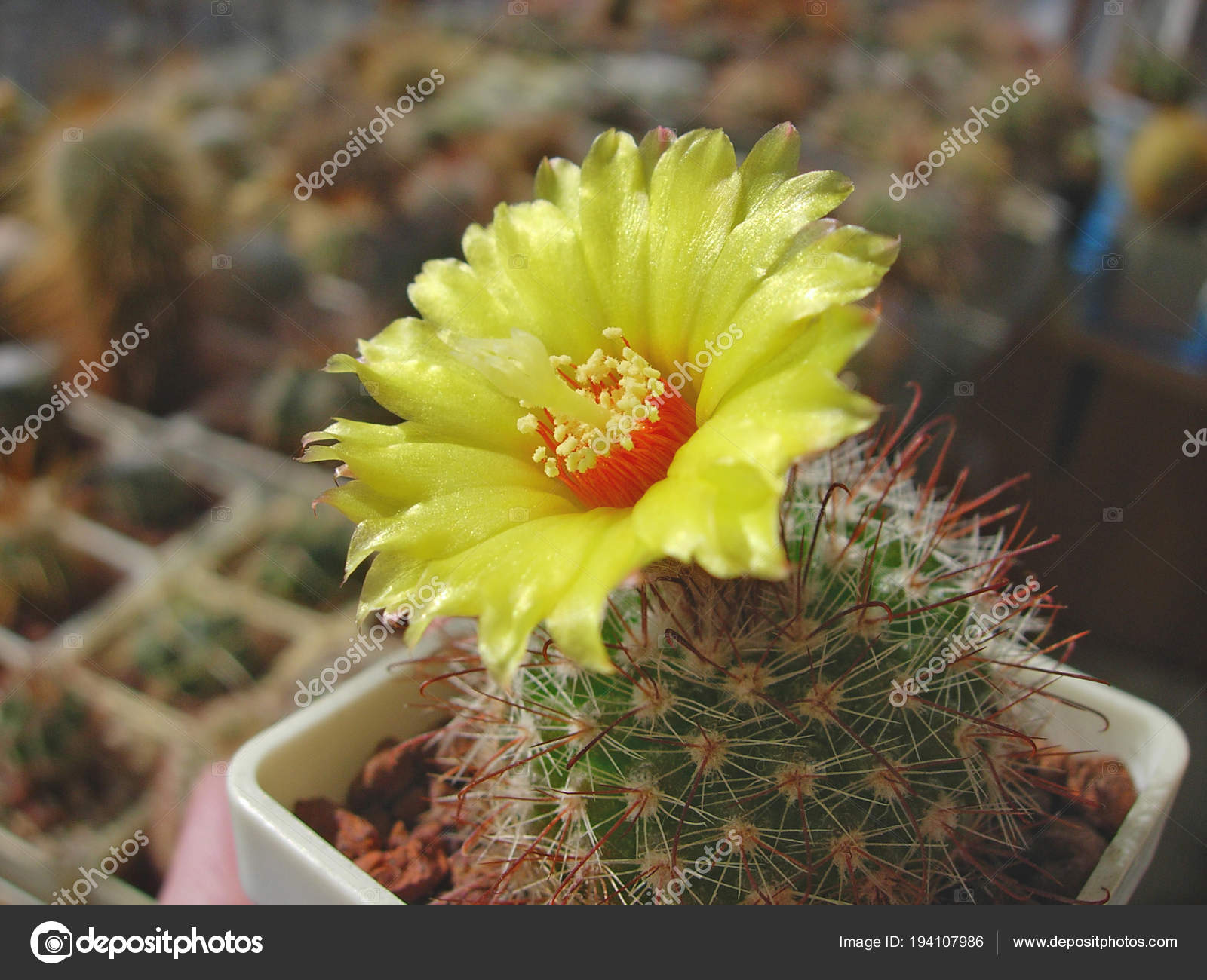 Пародии о цветке