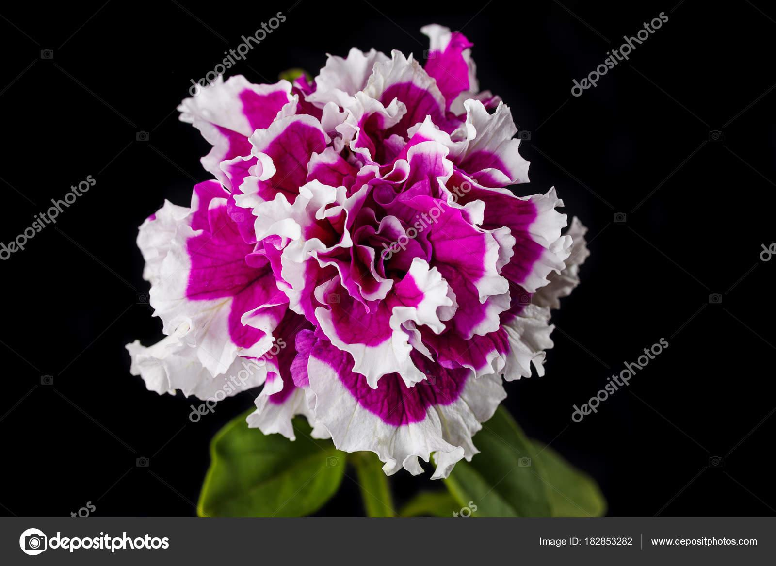 Belle Fleur Rouge Photographie Baronvsp89 C 182853282
