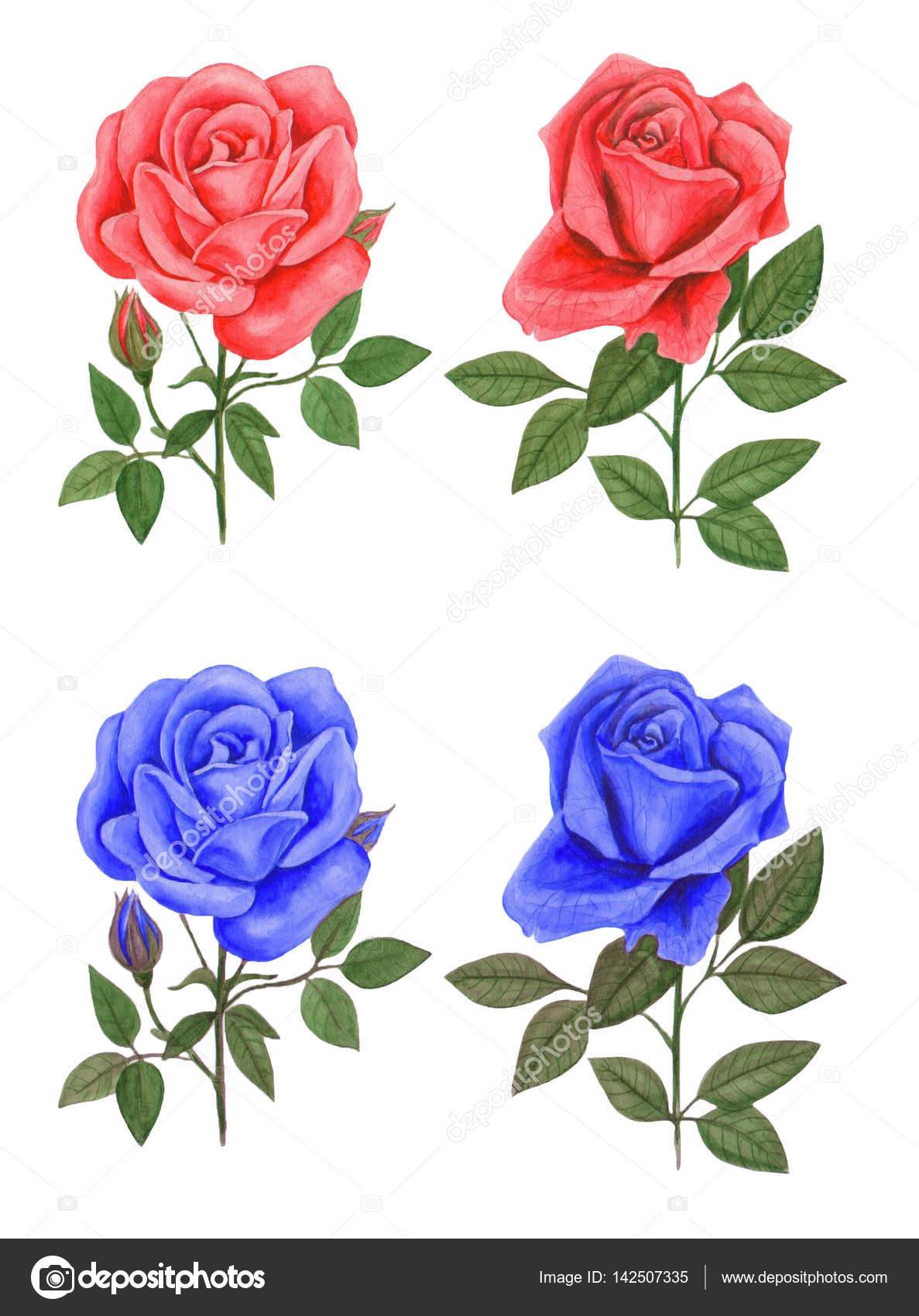 Rosas Rojas Y Azules Pintura Fotos De Stock Prusova 142507335