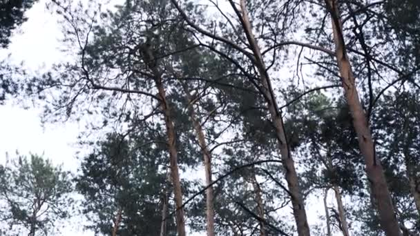 Jehličnatého lesa pohled, sklopení dolů