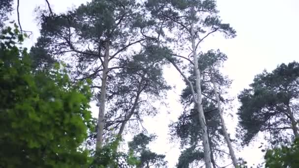 Krásné lesní scenérie natočeno během pohybu