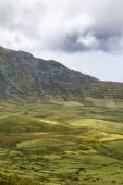 Portraitaufnahme der Hortensien am Rand des Corvo-Kraters auf der Insel Corvo in den Azoren, Portugal.