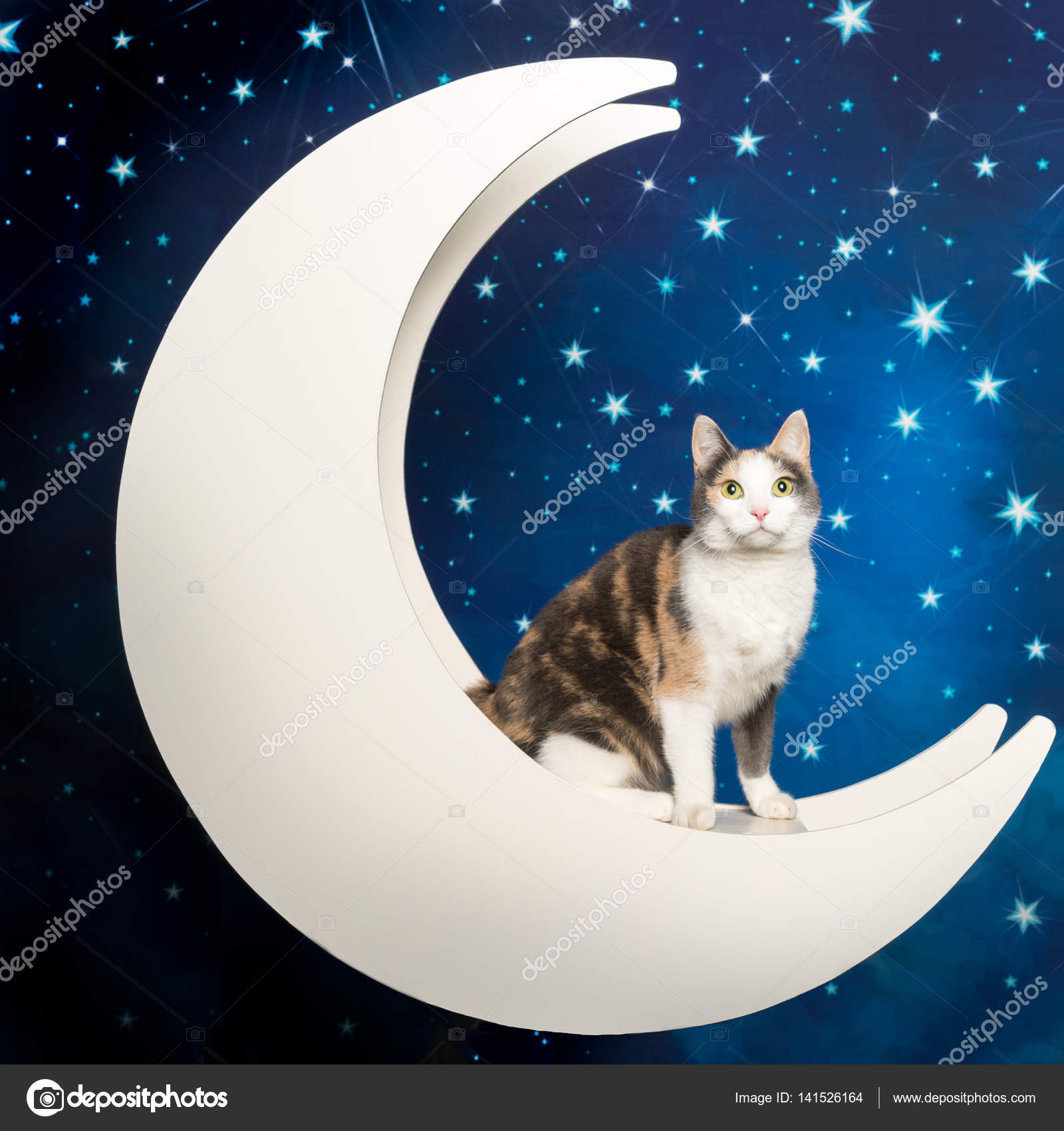 nahé ženské kočička obrázky