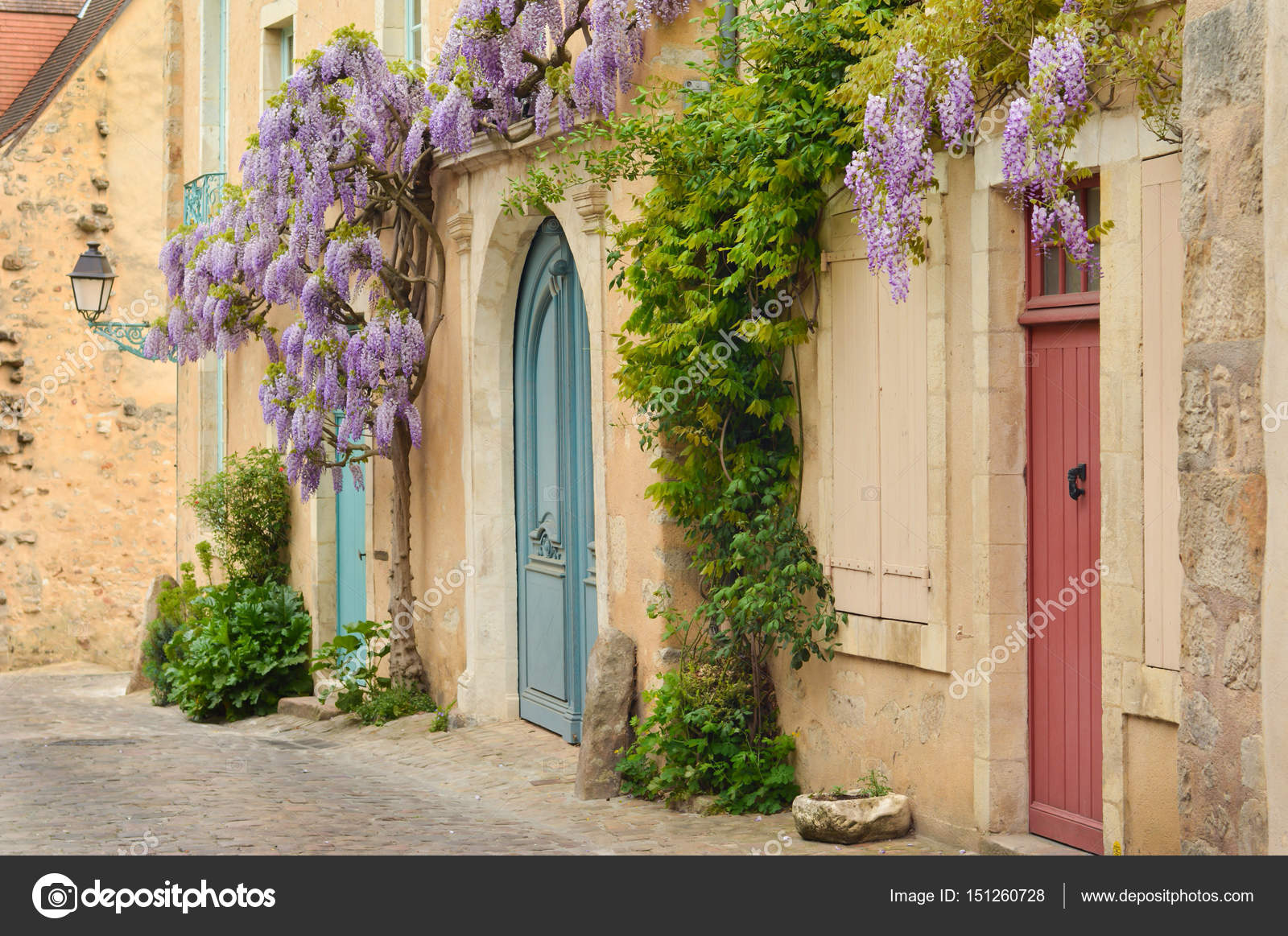 Old Wooden French Doors With Climbing Wisteria On The Wall Paris
