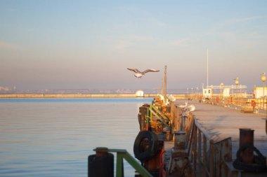 Seagulls sitting on pier. winter beach. Winter scene. Sunset.  Selective focus
