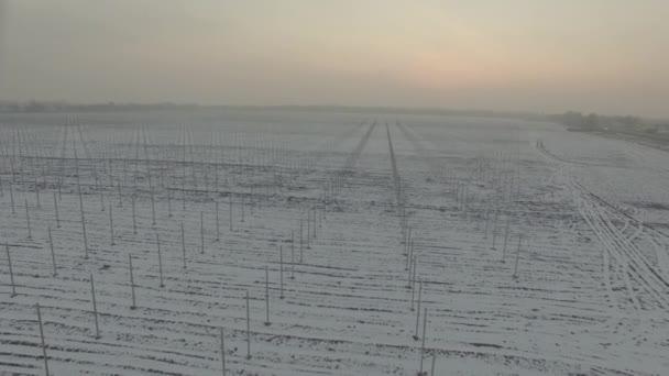 winter field vineyard. D-Log Flat Video For Editing