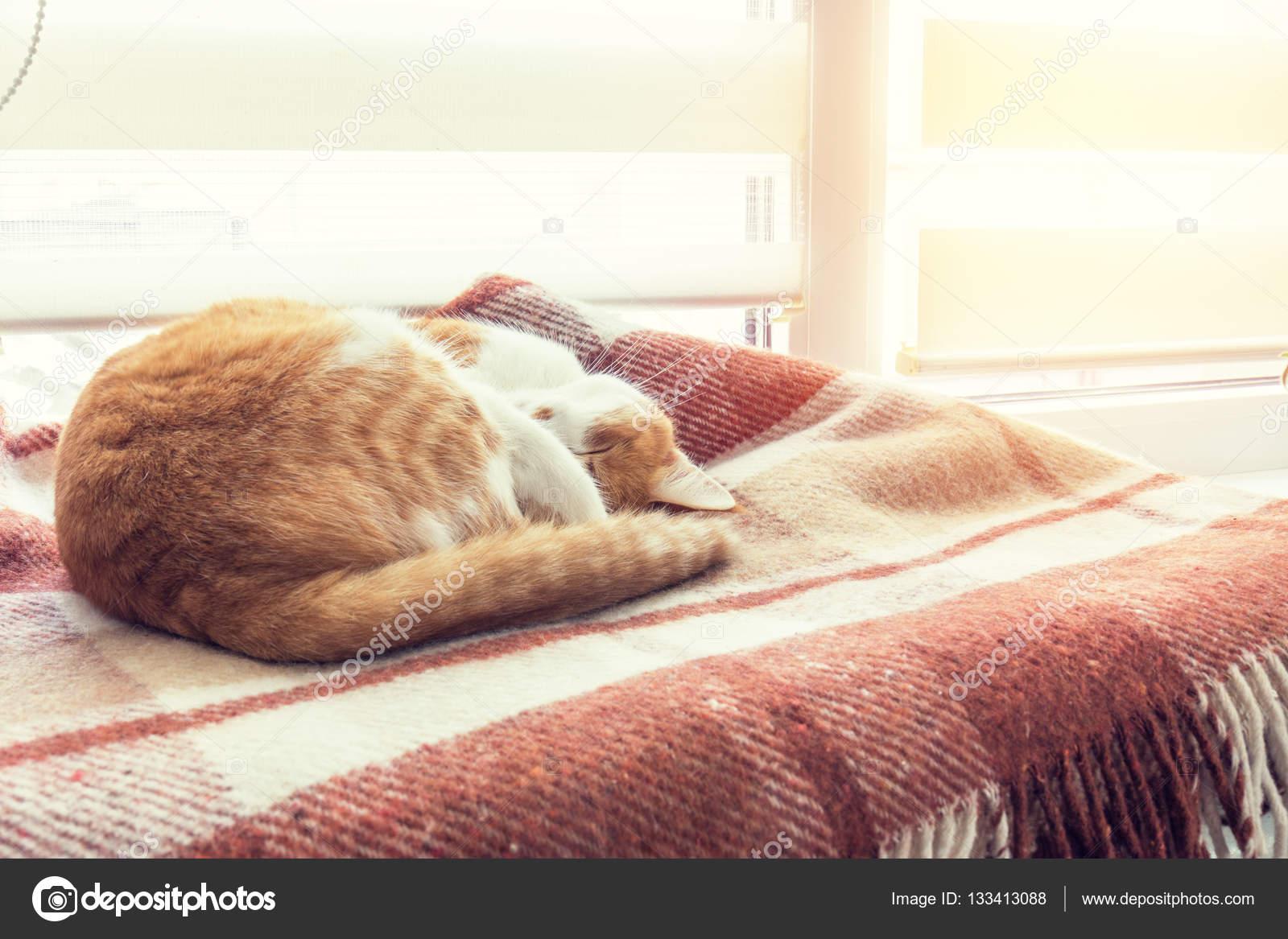 Gatto Rosso Che Dorme In Coperta Plaid Lana Calda Foto