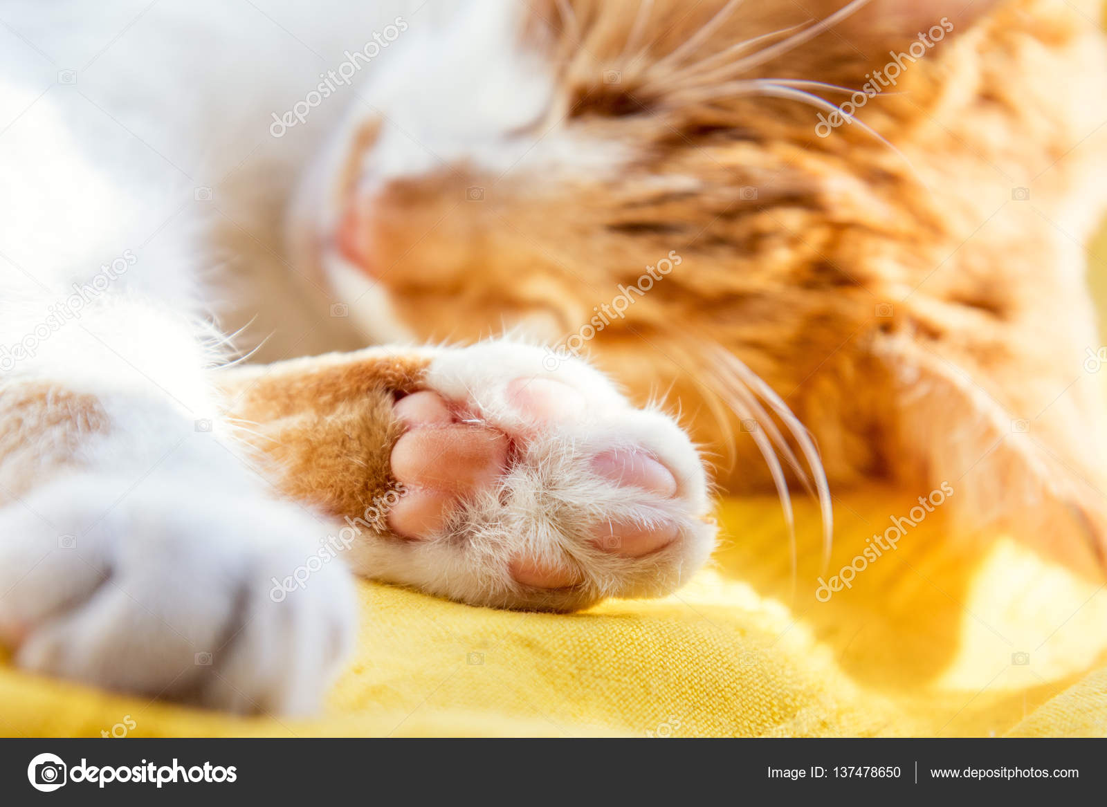 Luce Del Sole Di Mattina Sul Gatto Rosso Dorme Foto Stock