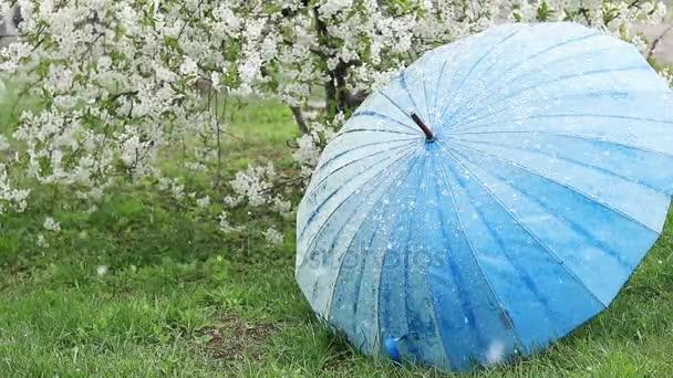 Kirschblüten im Garten. Schnee fällt. Der blaue Regenschirm wird vom Wind verweht. Zeitlupe.