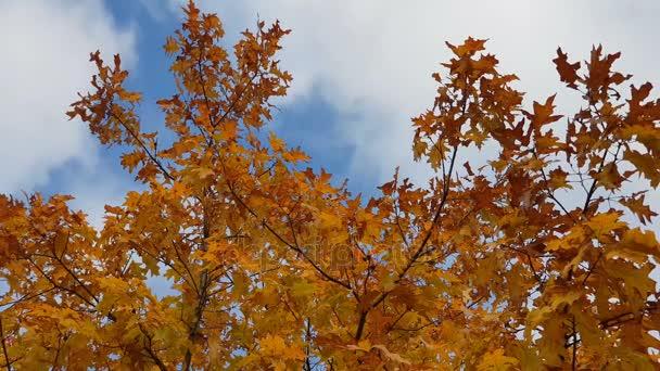 Őszi levelek. Színes őszi erdő erdő. Dinamikus jelenet
