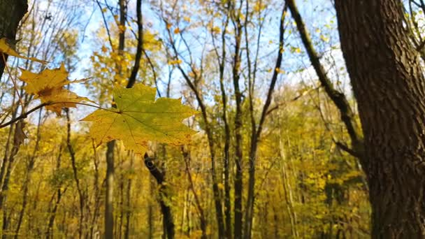Podzimní listí detailní. Barevné podzimní les lesy. Dynamické scény
