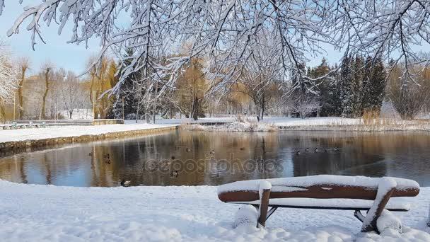 Prima neve nel Parco della città con le anatre su un laghetto ghiacciato e una panchina coperta di neve