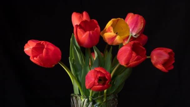 Červené a žluté tulipány zblízka na černém povrchu. 4 k Ultrahd videa časosběrným