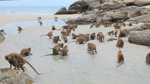 wilde Affenherde am Strand von hua hin prachuap khiri khan südlich von Thailand