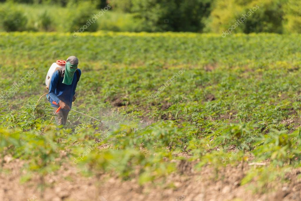 Man farmer to spray herbicides or chemical fertilizers on the fi