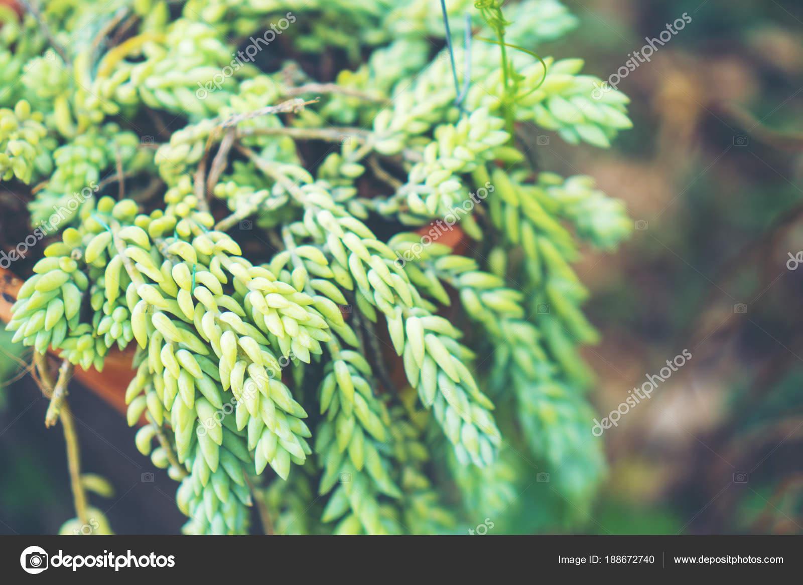 Floral Fond Jardinage Avec Variété Fleurs Jardin Colorés Outils ...